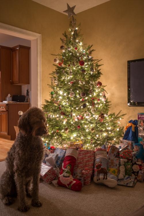 Christmas 2013-21
