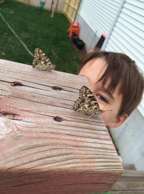butterflies13